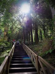 2015-10-25 10.40.47 (pang yu liu) Tags: travel 10 oct 阿里山 旅遊 alishan 2015 十月