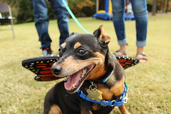 """Dogs, dog park, richmond • <a style=""""font-size:0.8em;"""" href=""""http://www.flickr.com/photos/31682982@N03/22337120199/"""" target=""""_blank"""">View on Flickr</a>"""
