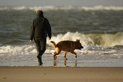 Walking the dog (Jaedde & Sis) Tags: dog beach candid behind shephard blvand unanimous matchpointwinner a3b challengefactorywinner thechallengefactory t480 herowinner