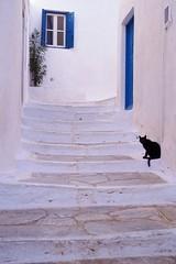Amorgos - Chora - rue (luco*) Tags: street black stairs cat chat noir greece rue grèce escalier chora cyclades kyklades hellada flickraward flickraward5 flickrawardgallery