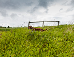 Abby Dog (Neal Edelstein) Tags: sky dog canada green clouds rural canon team raw farm alberta canon5d 24mm director producer albertacanada nealedelstein