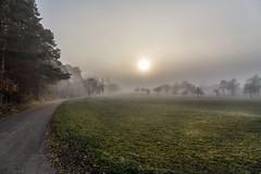 Foggy sunrise (Sebo23) Tags: autumn fog sunrise nebel sonnenaufgang canon6d canon24704l