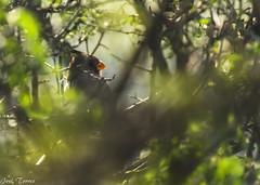 Serie: ya te vi (procesado doble) (Versus the blast) Tags: naturaleza nature nikon plantas aves desierto nikkor55200mm d5100 garca