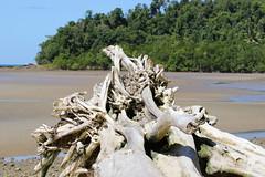Garners Beach (103) Driftwood (sixdos) Tags: sea sky texture canon landscape sand driftwood queensland missionbeach tropicalnorthqueensland farnorthqueensland garnersbeach canoneos7dmarkii missionbreaze