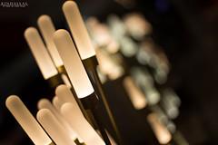 Light plants (Kindallas) Tags: light plant lights bokeh indoor eletric abajour