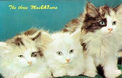 The Three MusCATeers (Guy Clinch) Tags: postcard cat kitten