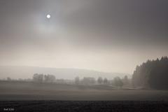 the pale sun (leaving-the-moon) Tags: 2016 201612 baden deutschland germany goodlight kraichgau landscape landschaft raureif sweethome whitefrost winter