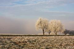 weiße Bäume am Horizont (leaving-the-moon) Tags: 2016 201612 baden bäume deutschland germany goodlight kraichgau landscape landschaft raureif sweethome trees whitefrost winter wood