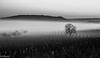 Brouillard sur les vignes (Fréd.C) Tags: fog mist brume vignes brouillard bourgogne noiretblanc tree arbre blanc noir bw canon lens 100mm france vineyard burgundy french
