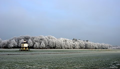 Dutch Wintertime Ripe (JaapCom) Tags: jaapcom wezep landscape ijsselvliedt pigeon coop trees wintertime ripe dutchnetherlands hollanda natural landed landschaft paysbas