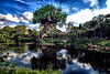 If you truly love nature, you will find beauty everywhere (Mambo'Dan) Tags: nature treeoflife flickrfriday waterreflection travel disney wdw