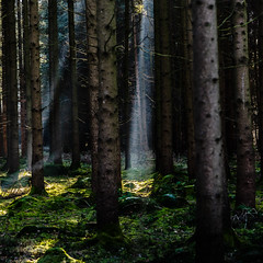 Light Beams (*Capture the Moment*) Tags: 2016 forest licht lichtstrahlen light lightbeam rayoflight sonnenstrahlen sonya7m2 sonya7mii sonya7mark2 sonya7ii sonyilce7m2 sonysel90m28g wald winter