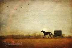 Amish Saturday Outing (Tracey Grumbach) Tags: amish pennsylvania lancaster travel traceygrumbach nineacresdesigns buggy horse carriage distressed mobileart winter saturday landscape