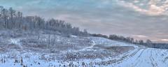 First snowfall at Schaefer's Woods (virgil martin) Tags: snow panorama landscape waterlooregion ontario canada panasoniclumixg85 oloneo microsoftice gimp