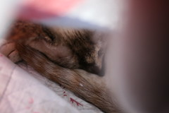 Zzz (nualasee) Tags: cat pet sleep snooze nap warm home cozy winter bed
