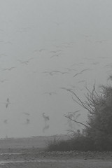 surrounded (Cano Vääri) Tags: 2017 lamancha winter birds complejolagunardealcázardesanjuan humedal laguna mist water alcázardesanjuan castillalamancha spain es bw