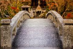 Kyoto, Japan (Aicbon) Tags: verde color colores puente kyoto kioto japan japon nihon nipon asia asiatic estetico aesthetic bello bonito puentecito mono kawaii momiji otoño japó tardor season canon eos 500 f14 50mm