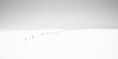 Fenceline (Sandra Herber) Tags: alberta winter minimalist minimalism