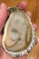 Good Lookin'!! (brucetopher) Tags: oyster oysters shellfish seafood food raw rawbar intheraw fresh salty shell mollusk mollusc mollusca bivalve harvest fallharvest fruitdemer fruttidimare aphrodisiac delicacy treat luxury appetizer chatham chathams