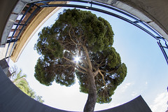 Green Heart (The_Recruiterz) Tags: cagliari sardegna sardinia tree architecture heart green