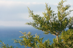 Sea by winter (lorenzoviolone) Tags: closeup d5200 dslr fuji400h nikon nikond5200 reflex vsco vscofilm growth leaves pointofview pov roadtrip:tuscany=jan2017 sea streetphoto streetphotocolor streetphotography tree monteargentario toscana italy fav10