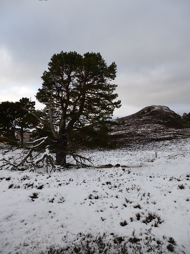 P27 Creag nam Ban from the firs
