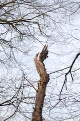 En lambeaux ! (Olivier_1954) Tags: charleroi 06000000 06006000 06006003 couillet environnement forêts iptcnewscodes iptcsubjects ressourcesnaturelles bois environmentalissue forests naturalresources wallonie belgique be