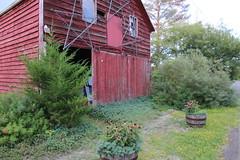 red barn (Krasivaya Liza) Tags: birthday trip flowers summer vacation ny newyork floral countryside country barns upstate farms hudson claverack holmquest