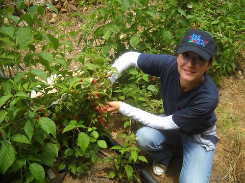 Sarah inspecting Raspberry plants Nabel Safa aa Jun 12, 2015