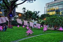 Hanami (chooyutshing) Tags: singapore hanami armenianchurch lightinstallation armenianstreet ciemastocproductionfrance zone225 singaporenightfestival2015