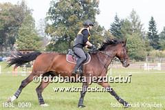 163L_0049 (Lukas Krajicek) Tags: military czechrepublic cz kon koně vysočina vysoina southbohemianregion blažejov dvoreček všestrannost dvoreek