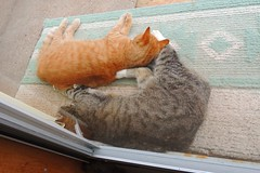 Amber and Beck, lounging on the front step (Hairlover) Tags: cats cat ginger tabby kitty kitties 15yearoldcat