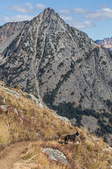 20151003-IMG_9964 (Ken Poore) Tags: washington hiking cascades larches northcascades geolocation maplepassloop geocity camera:make=canon exif:make=canon goldenlarches geocountry geostate exif:lens=ef24105mmf4lisusm exif:aperture=ƒ90 exif:model=canoneos6d camera:model=canoneos6d exif:isospeed=100 exif:focallength=84mm geo:lon=120752265 geo:lat=48501288333333