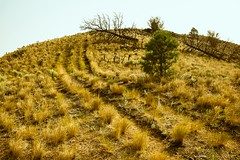 Walk Off The Earth  (EXPLORE #5) (evanffitzer) Tags: road trees outdoors flat earth britishcolumbia tracks trails running sage edge kamloops grasslands sagebrush sageland evanffitzer evanfitzer fujifilmx100s