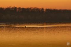 2015-11-01_Q8B4078 © Sylvain Collet.jpg (sylvain.collet) Tags: autumn france nature automne sur marne vairessurmarne vaires
