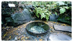 Spring water, Kiyomasa no ido (Toudai) Tags: leica f45 fujifilm m5 15mm meijijingu superwideheliar