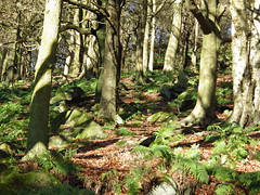 Hardcastle Crags (puffin11uk) Tags: calderdale 50club puffin11uk 50club2