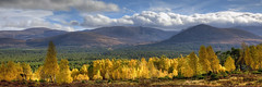 Cairngorms (Teuchter Prof) Tags: autumn scotland autumncolours aviemore birchtrees cairngorms rothiemurchus invernessshire lairigghru cairngormsnationalpark scottishhighlands whitewell