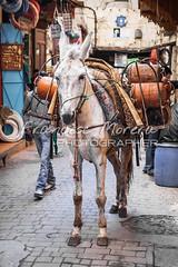 Gas delivery service (FM Photographer) Tags: africa fez medina marroc feselbali zocosouk muladonkey
