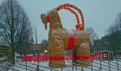 Coming soon your way - Minus 3 days (crusaderstgeorge) Tags: christmas xmas gävle christmasdecorations wintersday 2015 christmasgoat gävlebocken 1stadvent minus7days minus6days comingsoonyourway minus9days minus4days minus3days minus8days minus5days