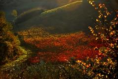 Scintillante controluce (fiumeazzurro) Tags: toscana abigfave