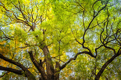 Touch Of Autumn.. (jamessurajbarwa) Tags: autumn light sky sun india abstract tree green nature beautiful yellow point james day colours outdoor branches sunny fresh line leafs kolkata