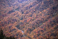 IMG_0413 Smoky Mountains (Alex Hsieh ()) Tags: autumn autumnfoliage usa fall canon nationalpark tn tennessee northcarolina fallfoliage smokymountains greatsmokymountains 6d 2015 smokymountainsnationalpark canon6d