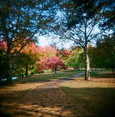 Colorful Fall Scene At Manhasset Valley Park; Manhasset, New York (hogophotoNY) Tags: park camera november usa newyork fall film analog toy us holga toycamera 120film scanned randy filmcamera holgamods filmphotography 2015 thedarkroom manhasset manhassetny hogo longislandpark hogophoto manhassetnewyorkusa ripholga