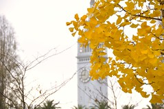 Fall Foliage (J@photo) Tags: autumn fallleaves fall waterfront fallcolors autumnleaves autumncolors fallfoliage embarcadero ferrybuilding autumntrees fallmorning fallinsanfrancisco