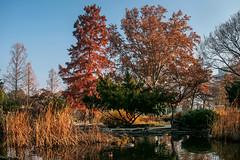 Budapest: Japnkert (Jorge Franganillo) Tags: budapest hungary magyarorszg park garden parque jardn japnkert japanese patos ducks pond