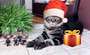 Christmas greetings 2016 with Baloo the Maine coon (romeosilverpersian) Tags: christmas xmas pets cats kitten kitty kittens santaclauscats mainecoon mainecoons mainecooncat coonies