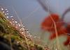 water droplets on mossy tree stump 2 (bob the lomond) Tags: bobthelomond scotland gartocharn lochlomond