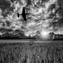 POP0020 (Smart Aviation Art) Tags: poppy poppies poppyfield poppyfields lancaster vulcan avro spitfire hurricane aircraft military bbmf