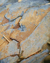 Kernow ov vy (I am Cornish) (Caroline Oades) Tags: kernow crackington beach rock rockface man native cornish facesinthings cornwall